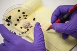 Clean Grow Still Failing? Check for Endophytic Mold